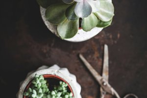 Succulents and scissors