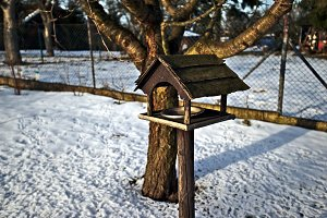 Wooden bird feeder in winter