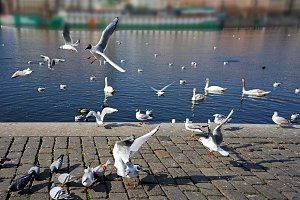 Group of flying seagulls