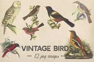 Vintage Birds Clipart