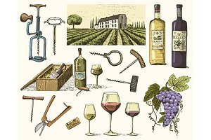 wine harvest products, press, grapes, vineyards corkscrews glasses bottles for menus and signage in the bar. engraved hand drawn in old sketch, vintage style for label or T-shirt.
