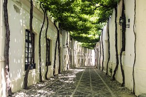 Old street whit vines