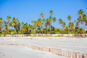 Palm trees on white sandy beach