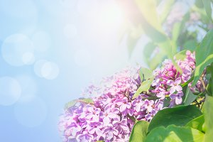 Lilac flowers over blue sky