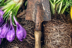 Gardening scoop with spring flowers