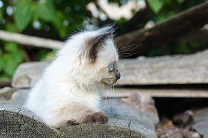 A kitten lies on a blackboard