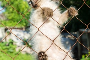 A kitten climbs on a fence from a