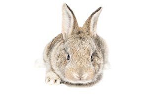 rabbit on a white background