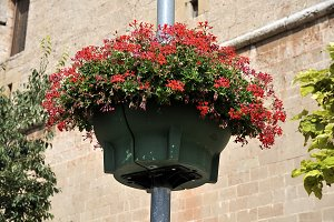 flowers on the lamppost