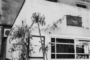 Vintage House Exterior