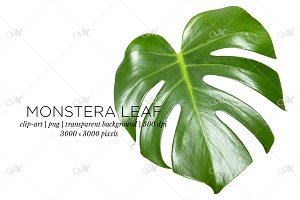 Monstera Leaf Photo Clip-art