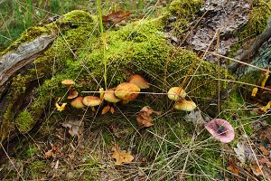 Groups of autumn mushrooms