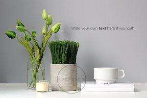 STYLED DESKTOP - TULIPS PLANT #20