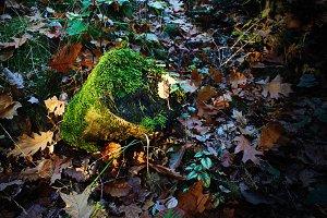 Stump in the autumn sunlit