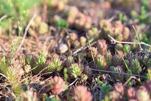 Beautiful red moss closeup
