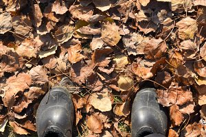Legs shod in galoshes against the background of fallen leaves.