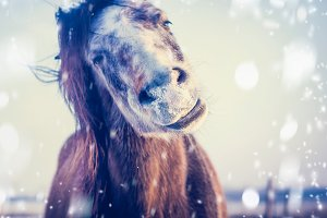 Funny Horse enjoys winter and snow