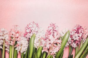 Pastel pink Hyacinths flowers layout
