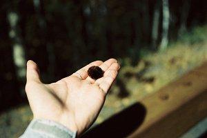 Caterpillar in Hand