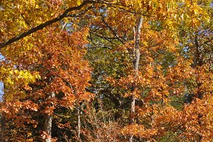 Autumn in Upstate New York