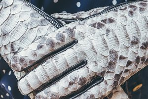 Woman hands with black and white fashionable snakeskin python gloves. Outdoors.