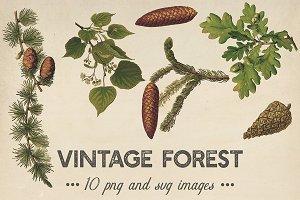 Vintage Plants Clipart