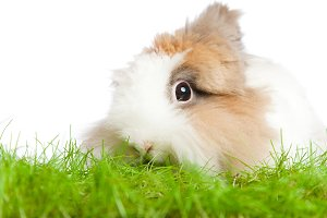 Cute Bunny Eating Grass