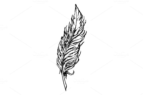 Monochrome Black And White Bird Feather Sketch Line Art Vector