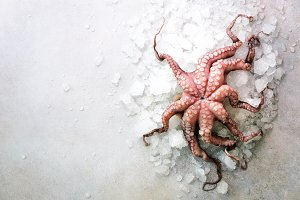 Fresh raw octopus on ice, grey concrete background. Top view, copy space