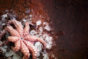 Fresh raw octopus on ice, brown dark background. Top view, copy space
