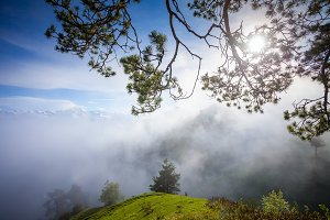 Misty mountain summer landscape with pine tree