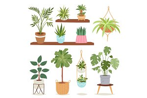 House plants tree vector nature flowers indoor interior decoration houseplant natural tree flowerpot illustration.