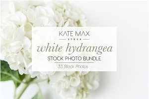 White Hydrangea Stock Photo Bundle