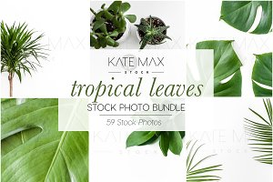 Tropical Leaves Stock Photo Bundle
