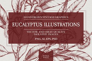 Eucalyptus Illustrations & Extras