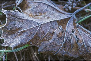 November. Autumn leaf covered with hoarfrost. Cool autumn.