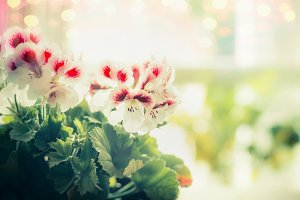 Pretty flowers at window background