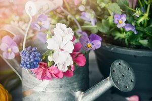 Watering can with plants and flowers