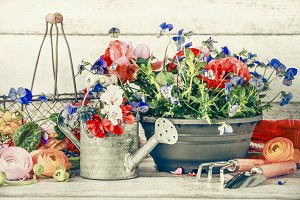 Gardening set with flowers and tools