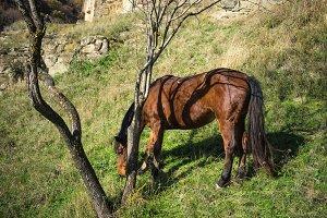Horse in a garden