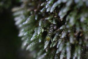 Blossom Moss Sprigs Macro