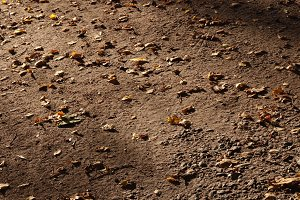 Park footpath strewn by dry leaves