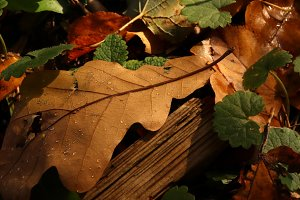 Dry leaves with weathered plank