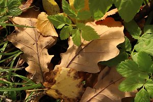 Dry leaves with first springs.