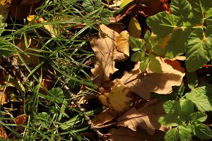 Dry leaves with green grass.