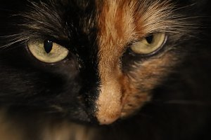 Looking Cat Eyes Portrait.