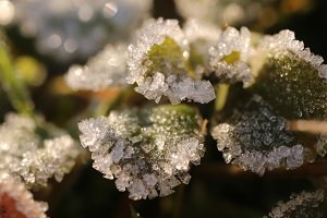 Frosted Green Sprout Leafs