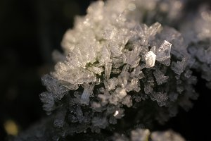 Frosted Green Leaf