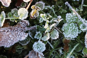 Frosted Grass Sprouts