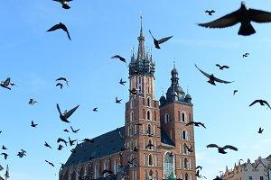 Birds, Krakow, Poland